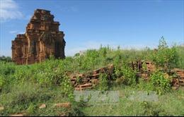 Di tích quốc gia đặc biệt tháp Hòa Lai xuống cấp, cỏ dại mọc um tùm