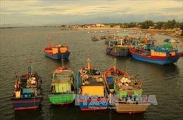 Nhà nước và doanh nghiệp cùng chống khai thác hải sản bất hợp pháp