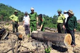 Kỷ luật một số cán bộ liên quan vụ phá rừng quy mô lớn tại Bình Định