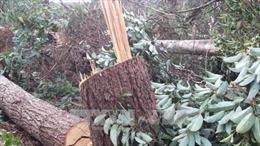 Kỷ luật hai cán bộ kiểm lâm để xảy ra phá rừng nguyên sinh ở Đắk Nông
