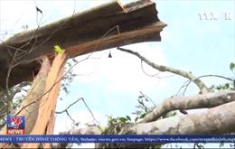 Kỷ luật hai cán bộ kiểm lâm để xảy ra phá rừng tại Đắk Nông