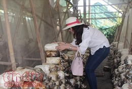 TP Hồ Chí Minh phát triển sản phẩm du lịch nông nghiệp công nghệ cao