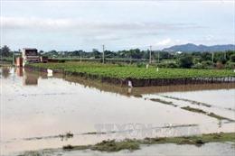Nhiều địa phương ở Phú Thọ bị thiệt hại nặng do áp thấp nhiệt đới