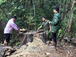 Khởi tố nguyên Trưởng Công an xã Đăk Ui (Kon Tum) về tội vi phạm quy định về khai thác và bảo vệ rừng