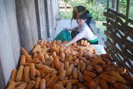 Đảng viên nữ đi đầu trong giảm nghèo, phát triển kinh tế