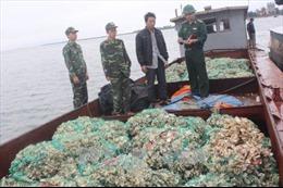 Quảng Ninh bắt giữ, tiêu huỷ gần 6 tấn hàu nhập lậu