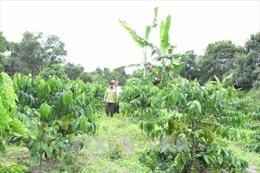Hiệu quả chính sách giao đất, giao rừng cho đồng bào dân tộc