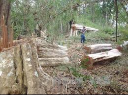 Gia Lai: Khởi tố 8 vụ việc, xử lý 87 cá nhân để xảy ra nạn phá rừng, khai thác rừng trái phép