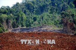 Vụ phá rừng tại Đắk Nông: Khởi tố, tạm giam một đối tượng về tội 'đưa hối lộ'
