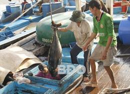 Bình Định chưa quyết liệt khắc phục 'thẻ vàng' IUU: