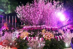 Hoa anh đào tươi rói khoe sắc tại Vườn hoa tượng đài Lý Thái Tổ