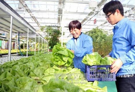 Thế giới đứng trước nguy cơ khan hiếm rau xanh