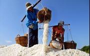 Phát triển và bảo tồn nghề muối tại huyện Cần Giờ
