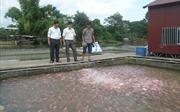 'Chìm nổi' nghề nuôi cá lồng