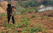 Mường Tè phát triển diện tích trồng ngô