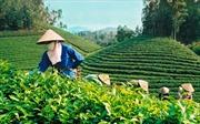 Thương hiệu cho nông sản Việt