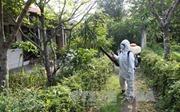 Dịch Zika tại Phú Yên đã chấm dứt