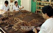 Bảo tồn và sử dụng có hiệu quả các bài thuốc Thái y viện triều Nguyễn