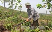 Tỷ phú trồng rừng ở Vĩnh Phúc