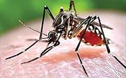 Dịch bệnh sốt xuất huyết đang bùng phát, cảnh giác với những dấu hiệu ở trẻ