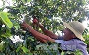 Tiên phong chuyển đổi cây trồng ở vùng đất nhiễm mặn