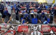 Mỹ tăng cường kiểm soát, cơ hội cho ngành cá tra Việt Nam 'nhìn lại mình'