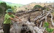 Thủ tướng Chính phủ yêu cầu làm rõ vụ phá rừng tại Bình Định