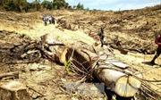 Kiên quyết xử lý đối tượng chủ mưu vụ phá rừng quy mô lớn tại Bình Định