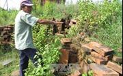 Phản hồi về việc Di tích quốc gia đặc biệt tháp Hòa Lai xuống cấp