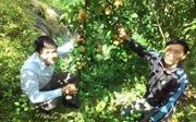 Tây Bắc phát triển cây trồng ôn đới