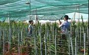 TP Hồ Chí Minh thu hơn 13.880 tỷ đồng từ sản xuất nông nghiệp