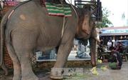 Đắk Lắk quản lý chặt việc gây nuôi động vật hoang dã