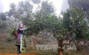 Tạo cú hích phát triển nông, lâm nghiệp ở vùng cao Yên Bái
