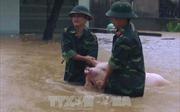Bộ đội giúp dân 'chạy lợn' trong mưa lũ tại Thanh Hóa