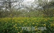 Lào Cai phát triển các sản phẩm nông nghiệp thành sản phẩm du lịch