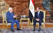 Ai Cập và Palestine tìm cách khôi phục tiến trình hòa bình Trung Đông