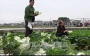 Nỗ lực giảm nghèo ở vùng đồng bào dân tộc thiểu số