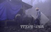Lạng Sơn tăng cường phòng chống đói rét cho gia súc, gia cầm