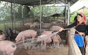 Hỗ trợ sản xuất để đồng bào dân tộc Lai Châu thoát nghèo