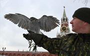 Đội ngũ lông vũ 'tinh nhuệ' bảo vệ Điện Kremlin