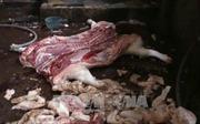 150/150 mẫu thịt được kiểm tra nhiễm khuẩn E.coli