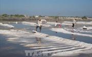 Sản lượng muối giảm khiến giá tăng