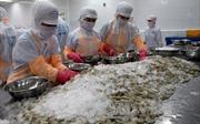 Từ 28/9, tôm tẩm bột nhập khẩu vào Australia sẽ phải xử lý bằng nhiệt ngắn