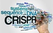 Các nhà khoa học Italy đạt bước tiến lớn trong công nghệ chỉnh gien