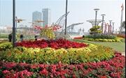 Sông Hàn Tết này đẹp lộng lẫy với con đường hoa Xuân sắc màu