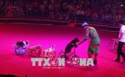 Khai mạc Gala Xiếc quốc tế lần thứ nhất