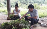 Rà soát chính sách tăng cường cán bộ trí thức trẻ về 61 huyện nghèo