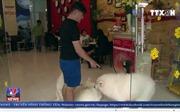 Các quán cà phê chó, mèo hút khách dịp Tết Nguyên đán Mậu Tuất