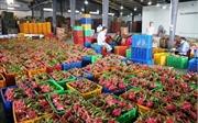 Agribank Long An đầu tư cho vay sản xuất nông nghiệp