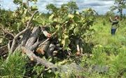 Đắk Lắk rà soát diện tích rừng tự nhiên bị phá, lấn chiếm